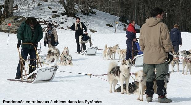 Randonnée chiens de traineaux dans les Pyrénées