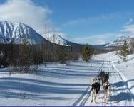 Randonnée en chiens de traîneaux au Canada
