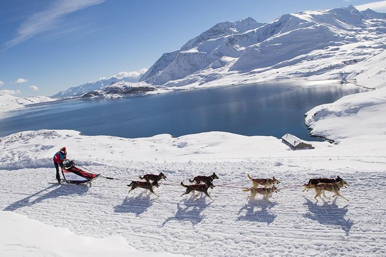 musher-odysee-savoie-mont-blanc-2015