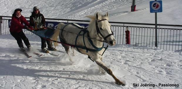Le ski joëring : ski tracté par un cheval