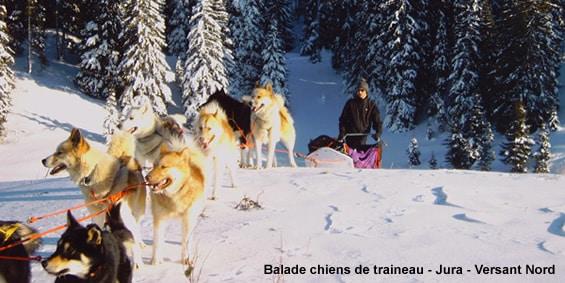 Randonnee chiens de traineau Jura