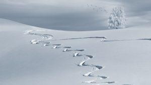 Quel équipement pour une randonnée sous la neige ?